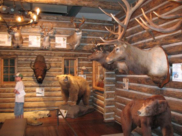 In the Boone and Crockett lodge at the Buffalo Bill Historical Center (Cody, Wyoming)